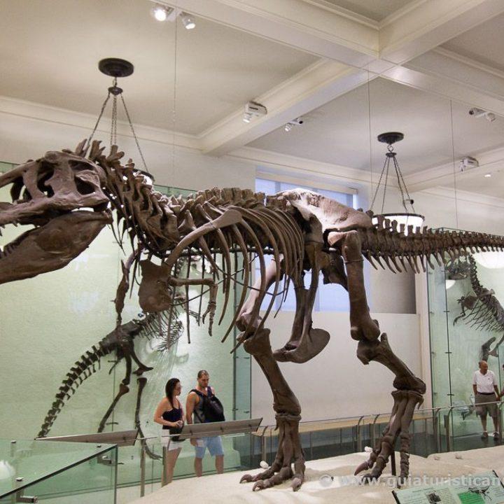 Museo Americano de Historia Natural de Nueva York