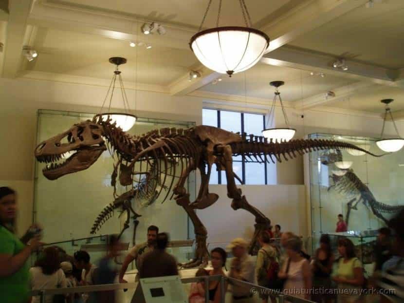 Interior del Museo de Historia Natural