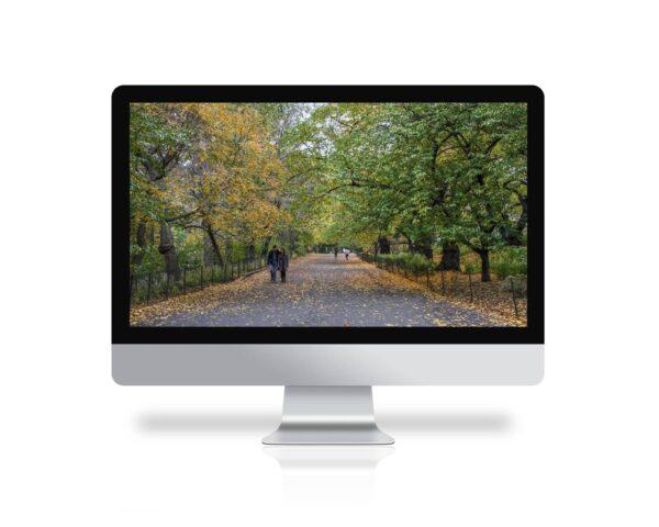 Central Park en otoño, fondo de pantalla
